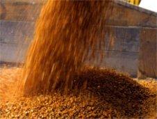grain-pouring